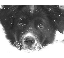 Dottie's First Snow Photographic Print