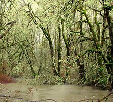 Forest Flood by scenebyawoman