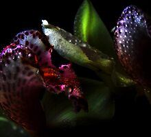 Fantastic Orchids. by Vitta