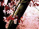 Blossom Heaven by karolina