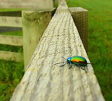 On the fence by Jamy Hillis