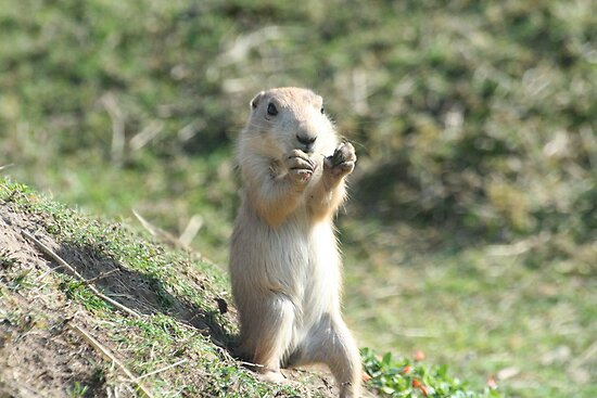 Who pinched my Nuts ! by Clickerpic