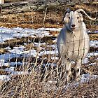 You Looking At Me? by Barb Miller