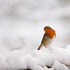 Christmas Robin by Mark Ellison