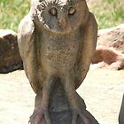 Owl (3802) by ScenerybyDesign
