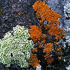 Some Lichen by Karen Karl