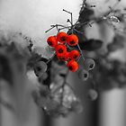 Red berries by evilcat