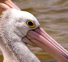 Pelican in Duplicate by Gary Secombe
