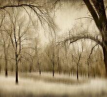 Winter Days by Kelly Cavanaugh