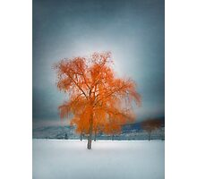The Dreams of Winter Photographic Print