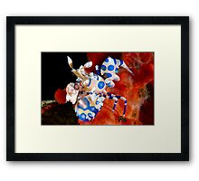 Harlequin Heavan Framed Print