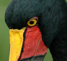 Saddle-billed stork by Paulo van Breugel