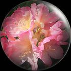 Azalea Bubble by JJsEscape
