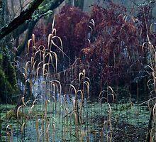 Cold Pond by NIEye