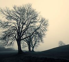 Navan Fort - misty tree by NIEye