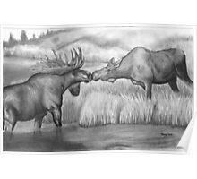 Two Moose Pair Off Poster