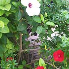 White Bloom by jfsrulz