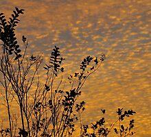 Gold Sky - Deltona, FL by Karl F Davis