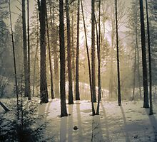 Winter Light by Tara  Turner