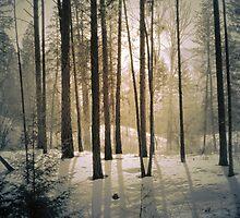 Winter Light by Tara  Turner