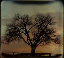 Fenceline TTV by Tia Allor