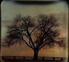 Fenceline TTV by Tia Allor-Bailey