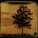 Amber Skies TTV by Tia Allor (formerly Bailey)