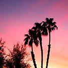 Christmas Eve Palms by skreklow