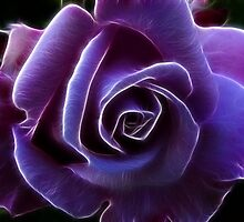 Purple Rose by liaimages