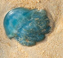 Jelly Fish 1 by Werner Padarin