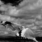 Seagull, Tasmania, 2009 by Ashley Ng