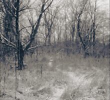The Paths Revealed by Mitch Labuda