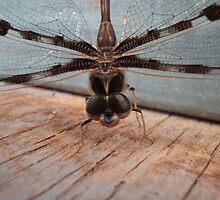 Dragonfly in Garage by frenzix