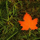 The Perfect Leaf by sundawg7