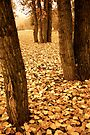 Fallen Leaves by Roxanne Persson