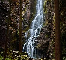 Black Forest Cascade by Michael Breitung