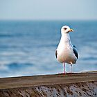 Winter Gull by David Bradbury