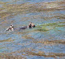 Resting Otter, Monet by stevenjay