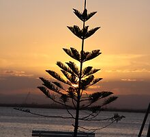 tree at woody point at sunset by aussieazsx