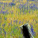 Blue Meadow by John Brotheridge