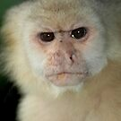 Capuchin Monkey in Panama by Marieseyes