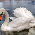 Swans in HDR by Svetlana Sewell