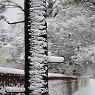Walk in snow by Bluesrose