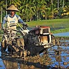 Hard work on rice paddies.... by mrLEV
