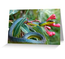 Bluish Green Tree Snake - Dendrelaphis punctulata Greeting Card