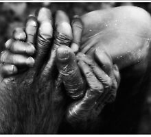Koko's Hands by Mel Collins