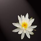 Water Lilly 2 by Dale Lockridge