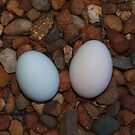 Eggs Found by Kylie Van Ingen