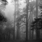 Foggy trees by Lois Romer