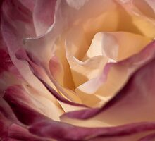 Softly Risen by Kevin Bergen